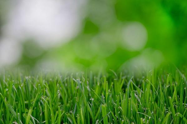 blur-blurred-eco-9257.jpg