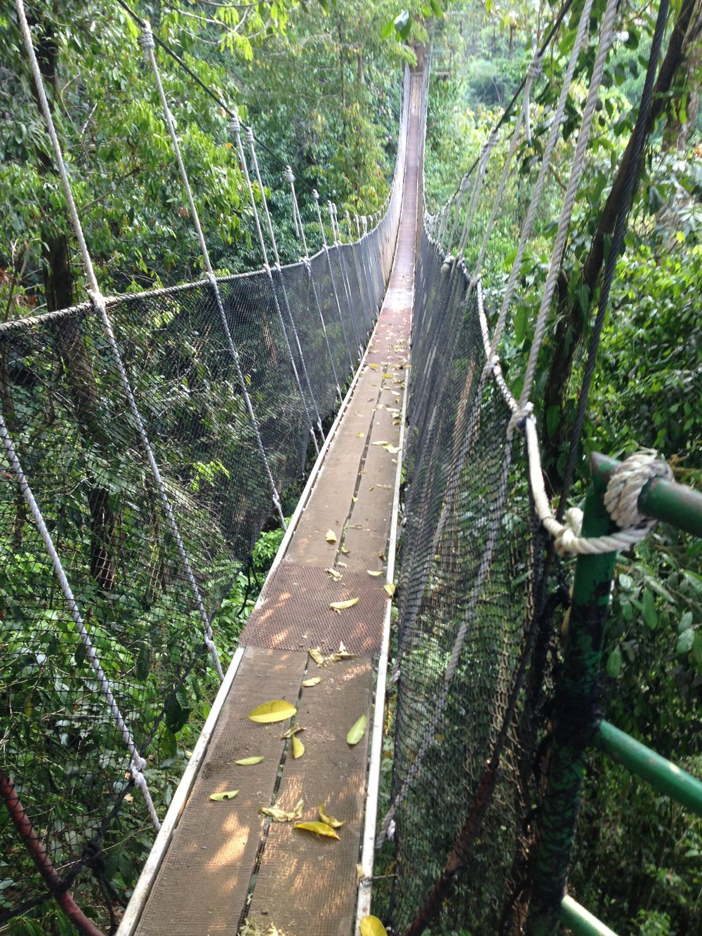 Suspension bridges led me across the treetops to a series of waterfalls .