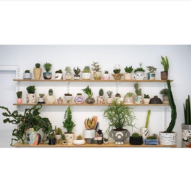 @prickldn WINNING at bringing together an amazing group of women who've created something special with a love of plants and supporting each other. Head to @prickldn to check out the whole collection 😍 🌵