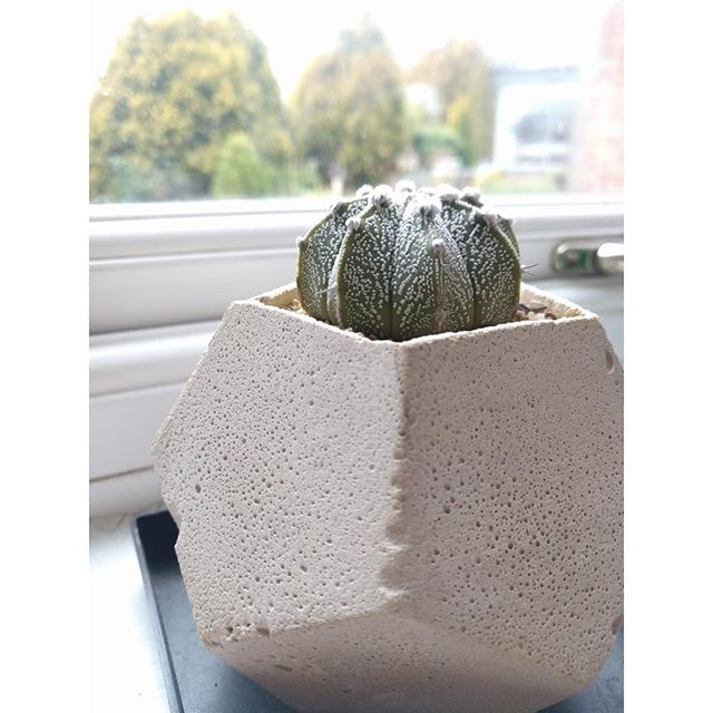 Astrophytum basking in some winter sun back at concrete jungles HQ