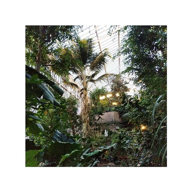 After an ace evening of overloading my senses and considering how to 'accidentally' get locked inside the conservatory, I've been feeling inspired to post more often so we'reeeeee bbbaaaaacccckkkkk 🌿 thank you @airbnbdesignteam for hosting such a magical evening, the experience was Unforgettable #airbnbpixeltoplace