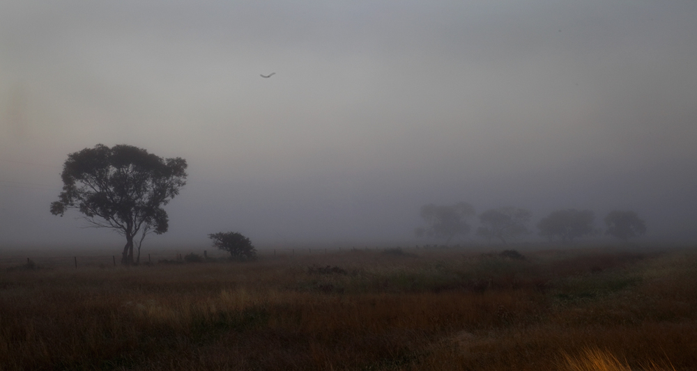 fog1_1.jpg