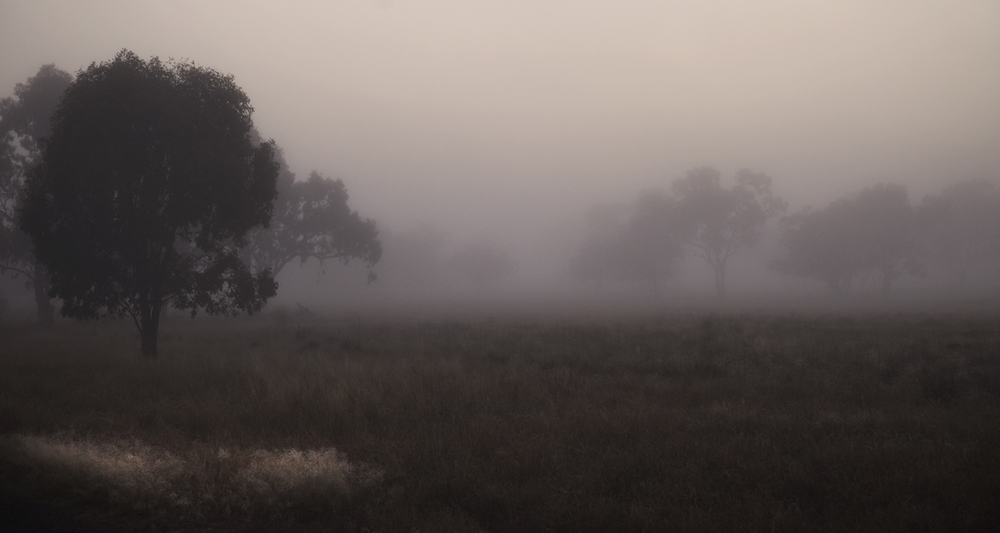 fog_4.jpg