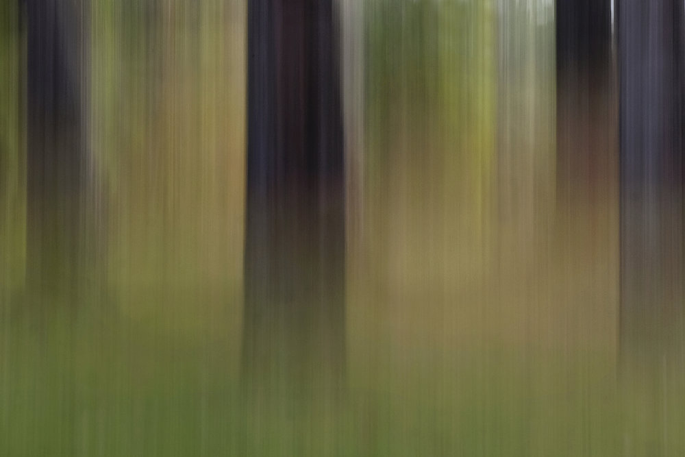 woodlands_#1.jpg