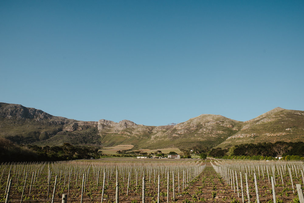 Wedding Cape Town Yeahyeah Photography Cape Point Vineyards Jono