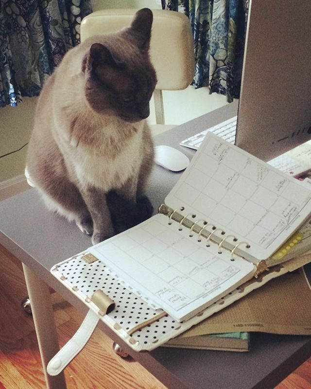 BUSY #officecat