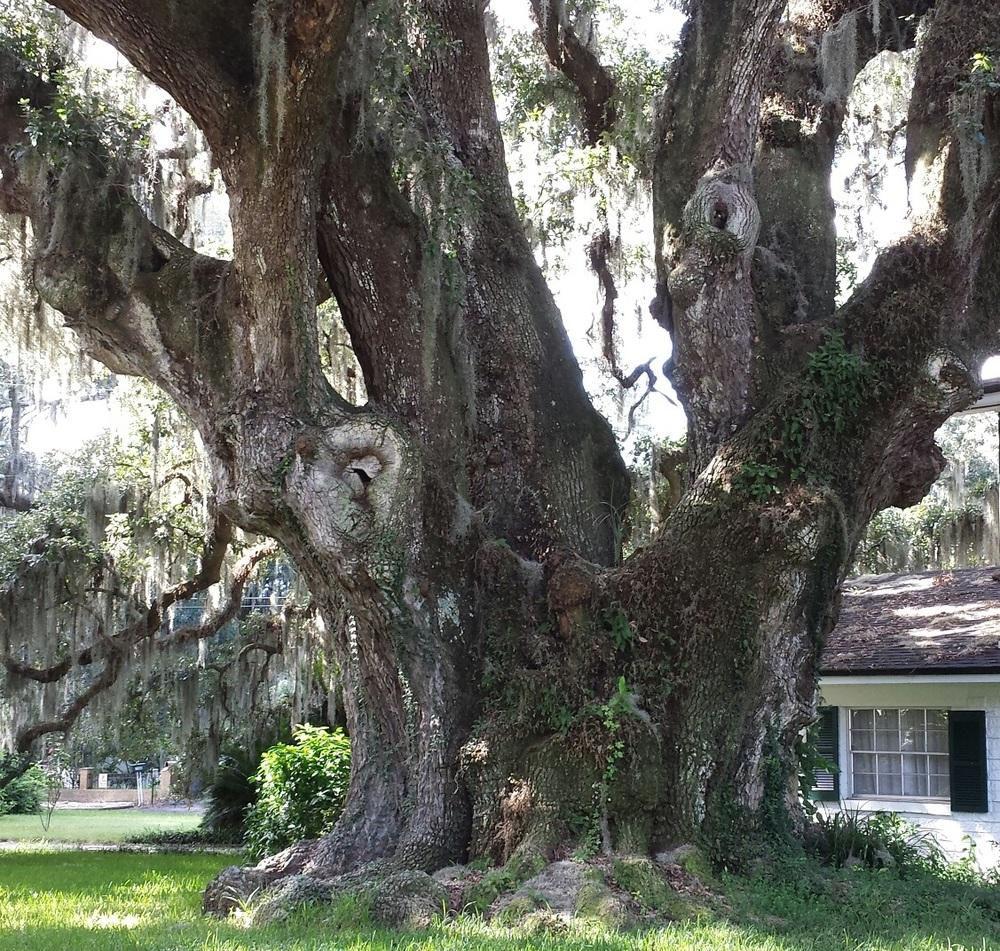 Oak and Moss.jpg