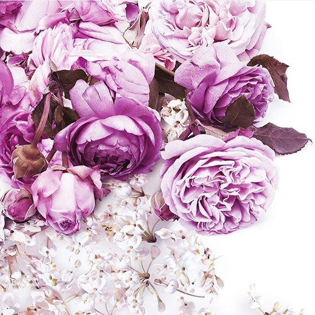 Pretty pretty princess- @gucci #weddingflowers on a Sunday 💋