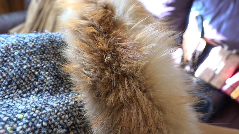 026 Fox Fur.jpg