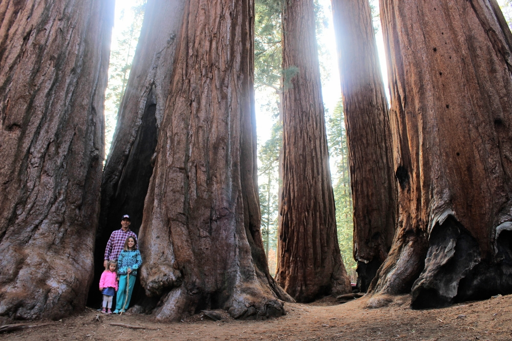 Sequoia National Park: The Parker Group