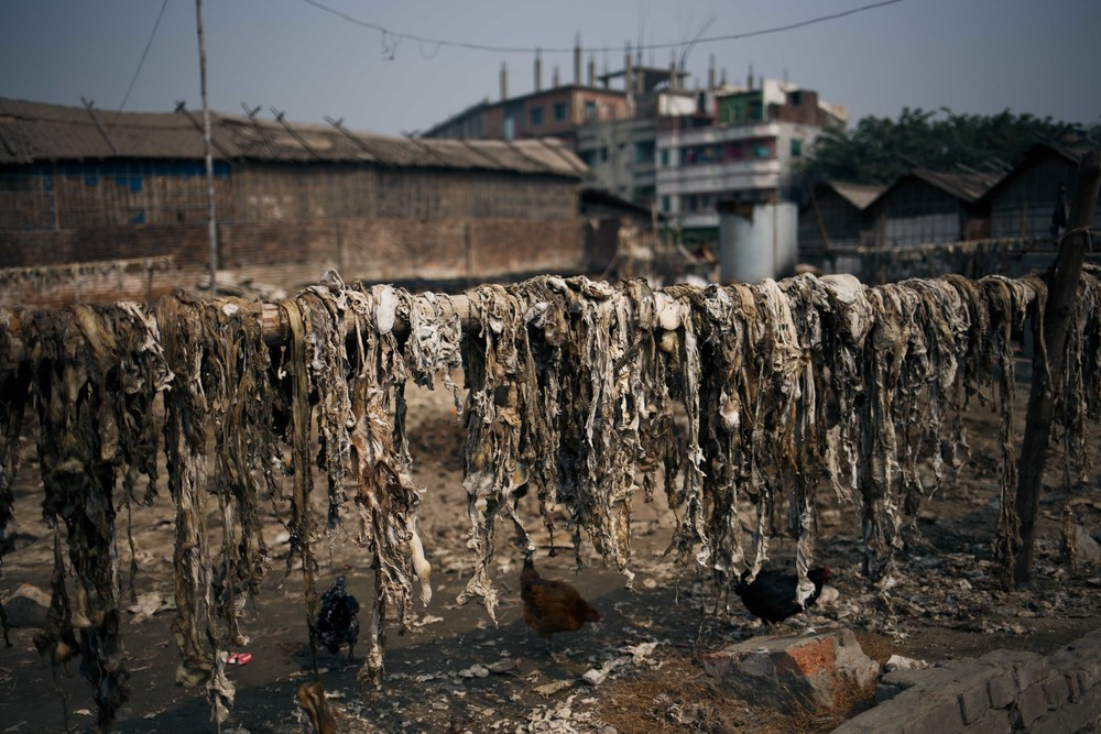 The lower quality hides pictured here are left to dry and used for cheap items such as key rings. The smell from the drying hides and tannery process is so strong that it travels miles with the wind.