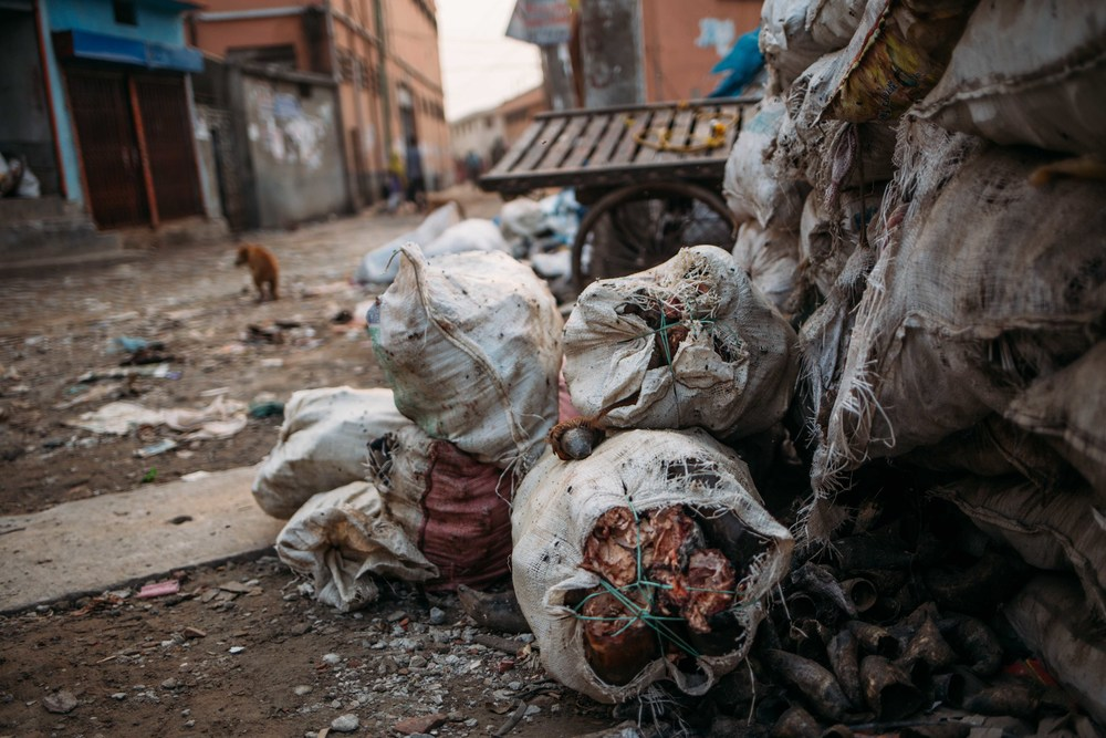 Animal carcasses are rounded up and tied together into bags which are then dumped. The rotting carcasses draw in vermin and disease to the inhabitants of the area.