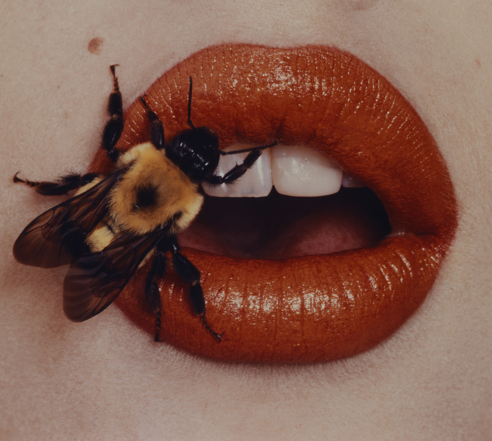 Image Credit: Irving Penn, Bee, New York, 1995, Copyright © The Irving Penn Foundation