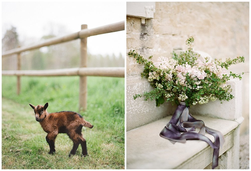 Baby goat in farmland near the chateau, rustic florals; Sylvie Gil Photography