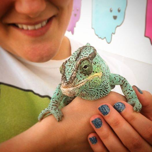 Edwardo the chameleon event came to visit! Photo credit: Erica Scheutzow of  As I Breathe i Hope