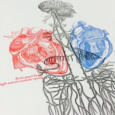 Anatomy Art Print/Letterpress Jess
