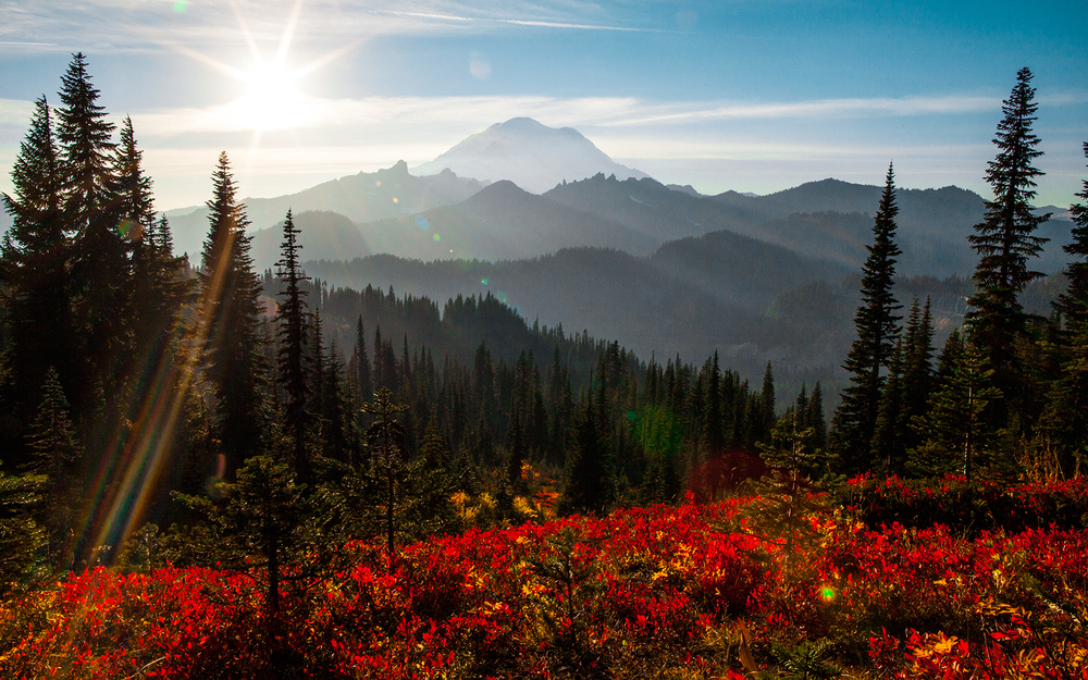 Fall in Mt Rainier