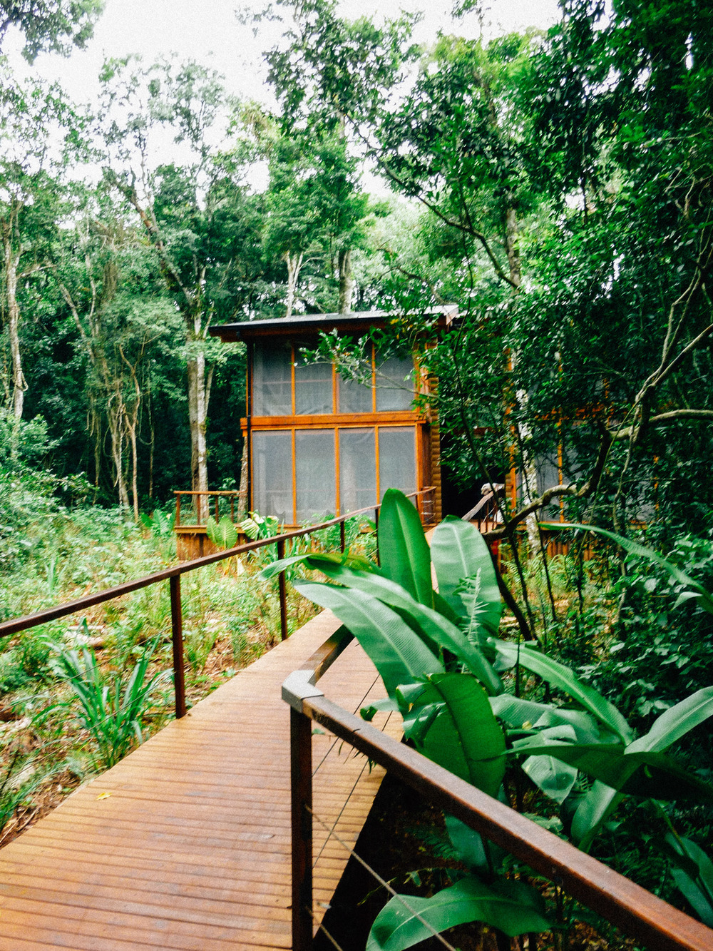 Jungle House