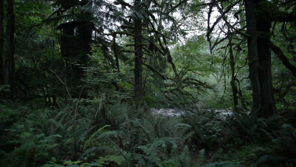 Rain Forest Original