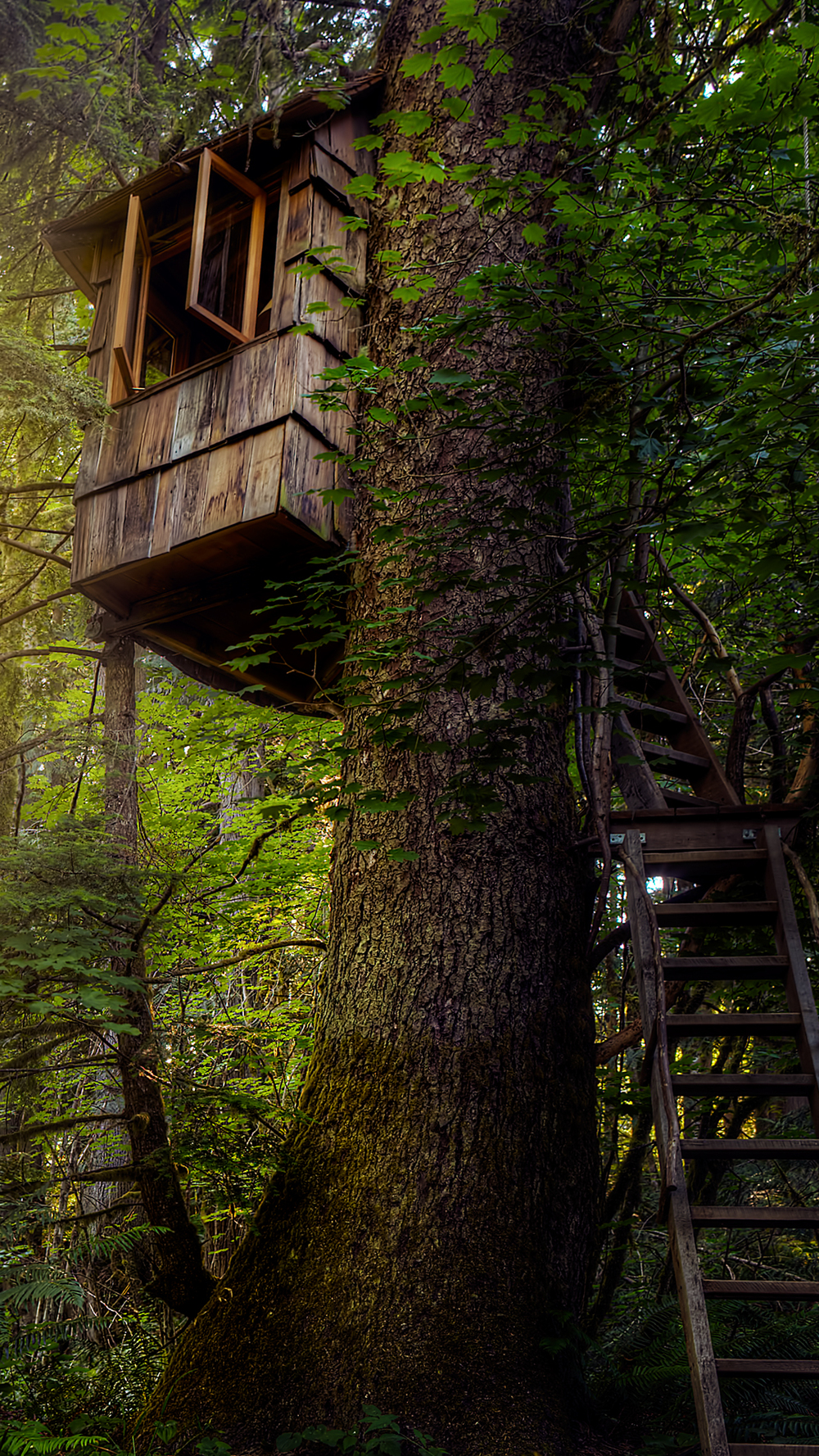 6Plus-HTreehouse.jpg