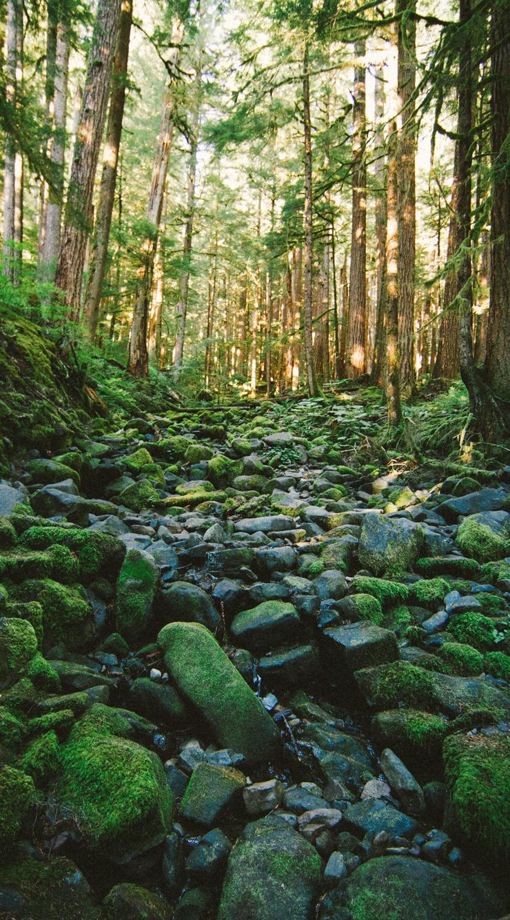 iPhone6-Creek.jpg
