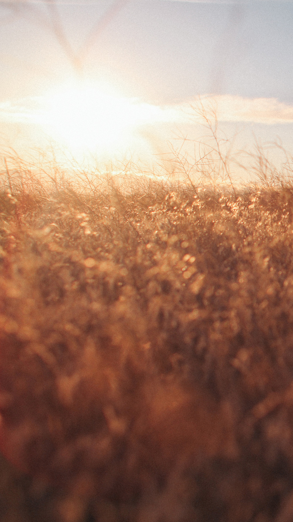 6Plus-Prairie.jpg