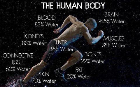humanbodypic.jpg