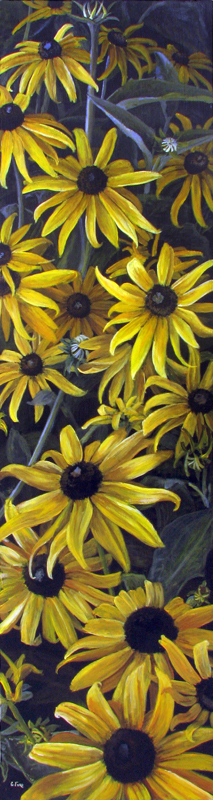 Black Eyed Susan's