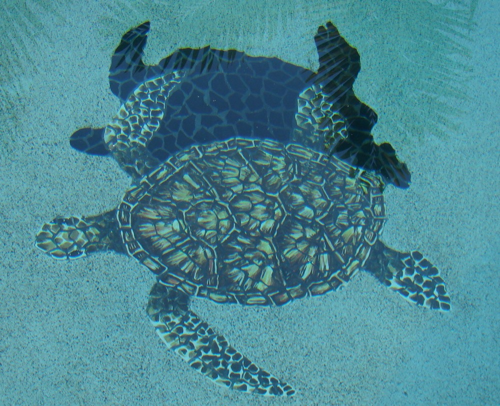 Closeup Turtle