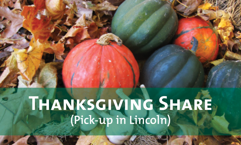 Lincoln Thanksgiving CSA button-2.png