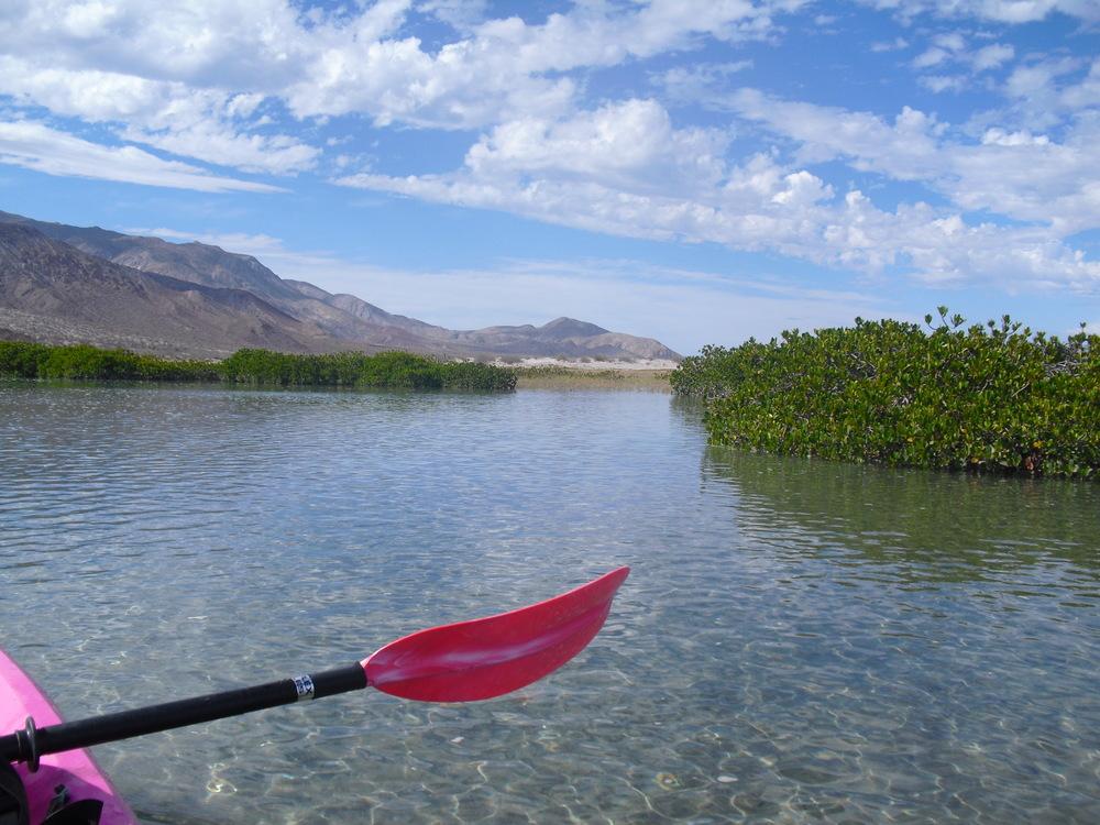 Mangrove Estuary // Bahia de Las Animas, Baja California (Mexico)