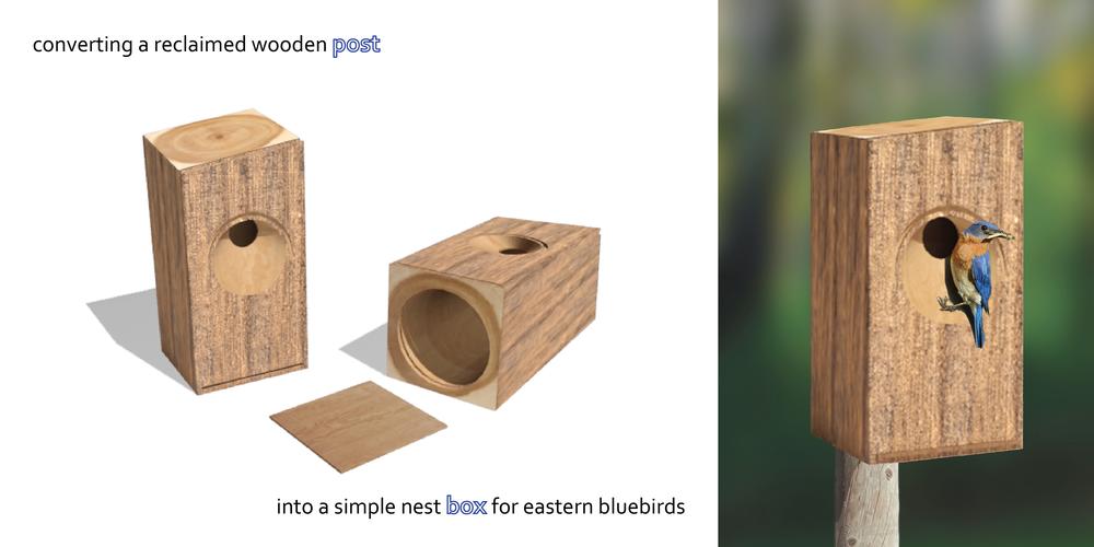 post box : eastern bluebird