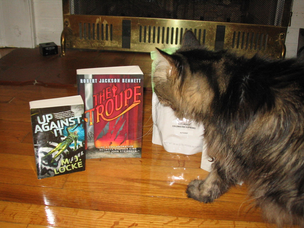 Mr. Macavity, checking out the goods.