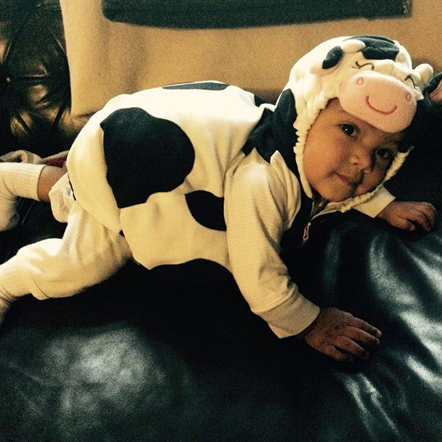 Holy Cow! It's Myles first Halloween😄#halloweencow