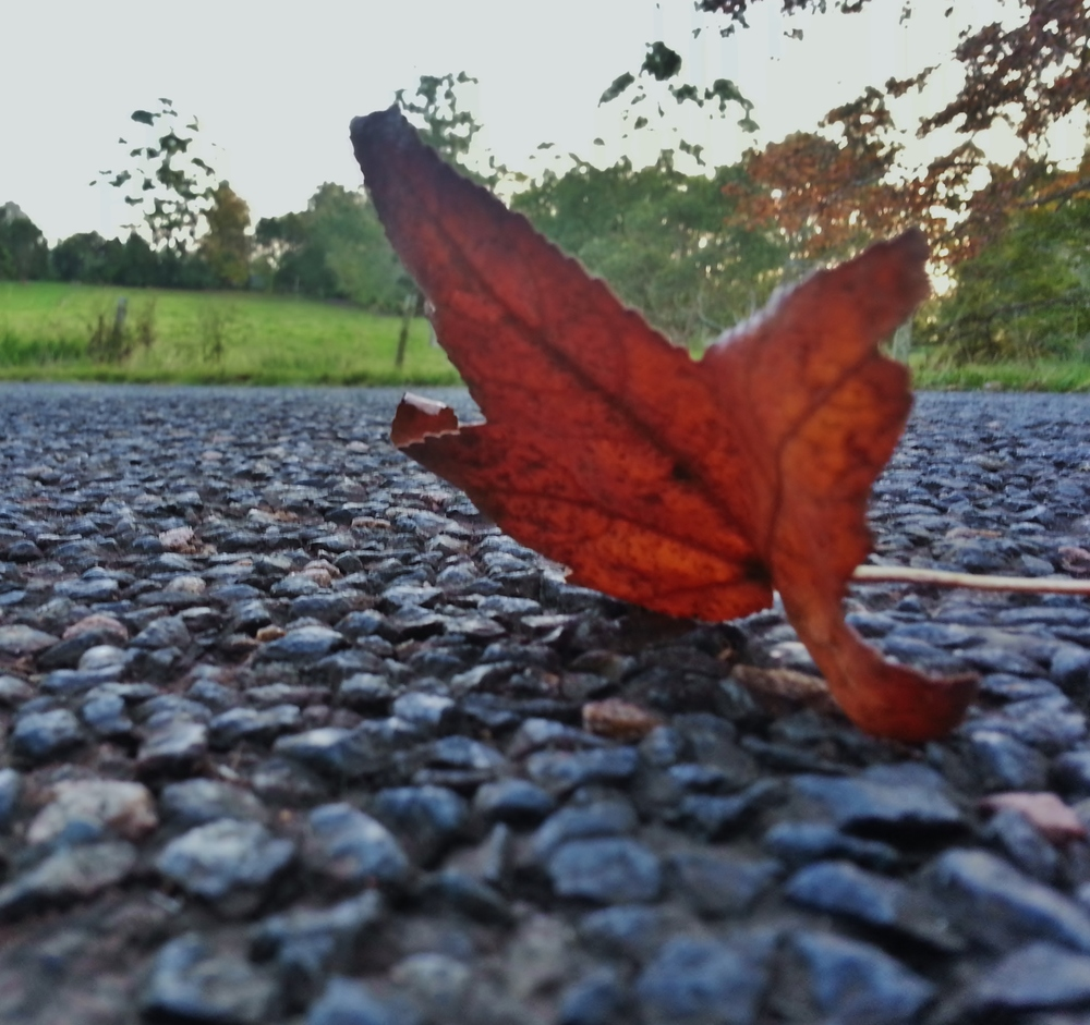 autumn  sue moxon