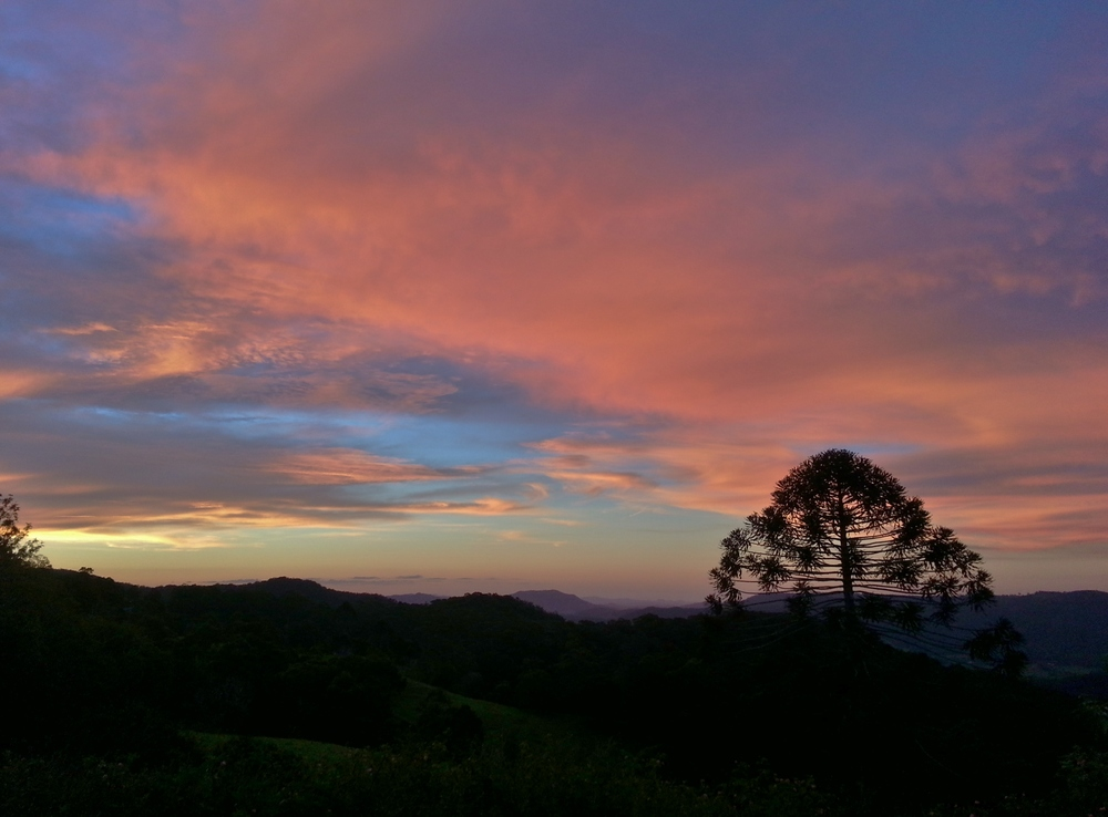 Bunya tree sunset
