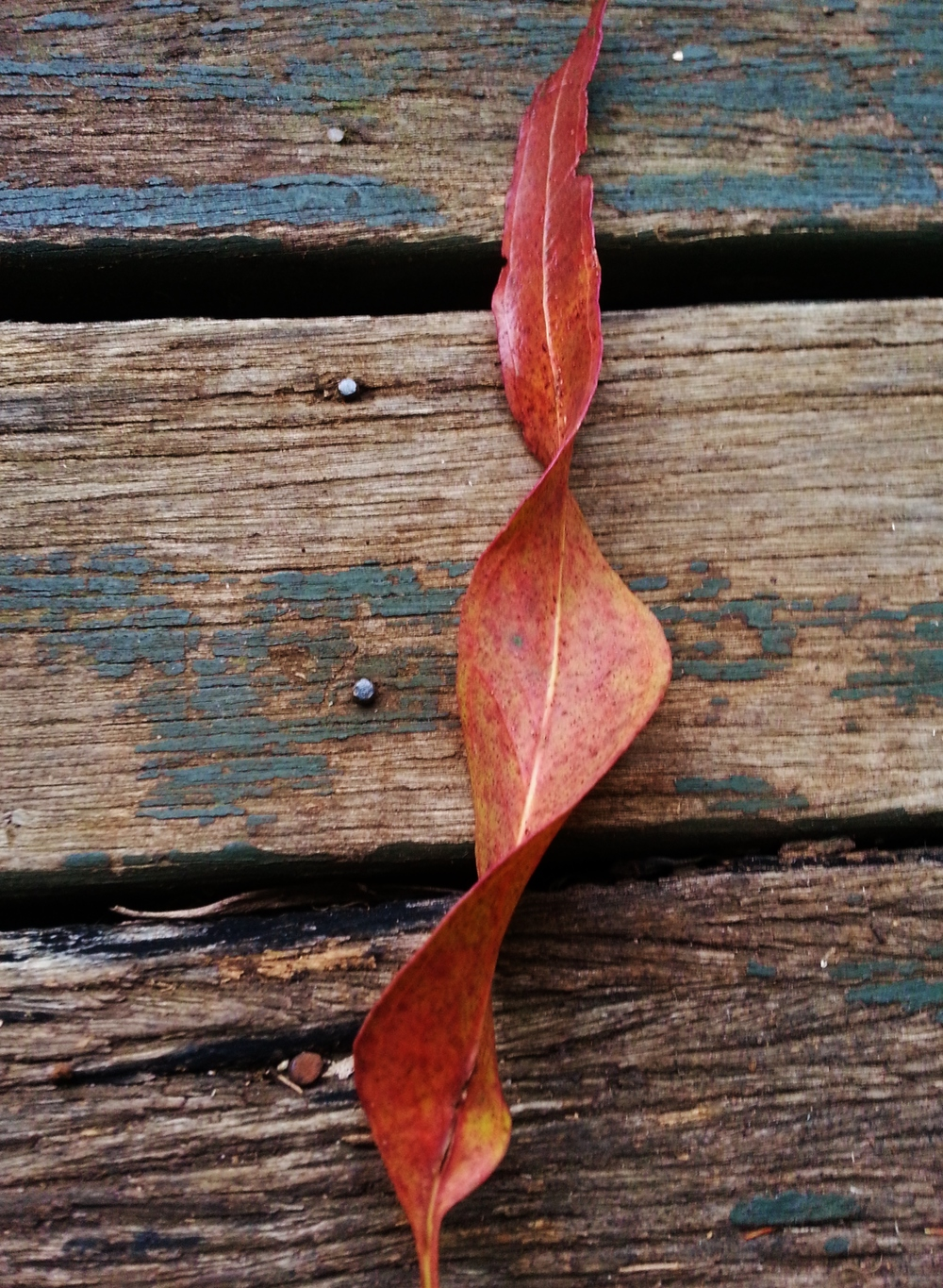 TWISTED LEAF sue moxon