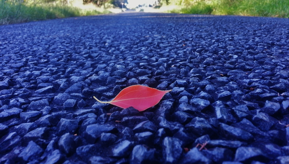 red leaf on road sue moxon