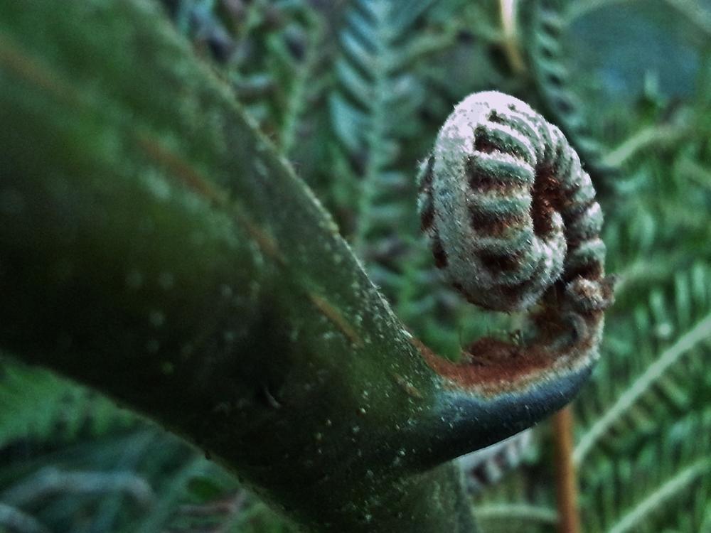 unfurl like a leaf