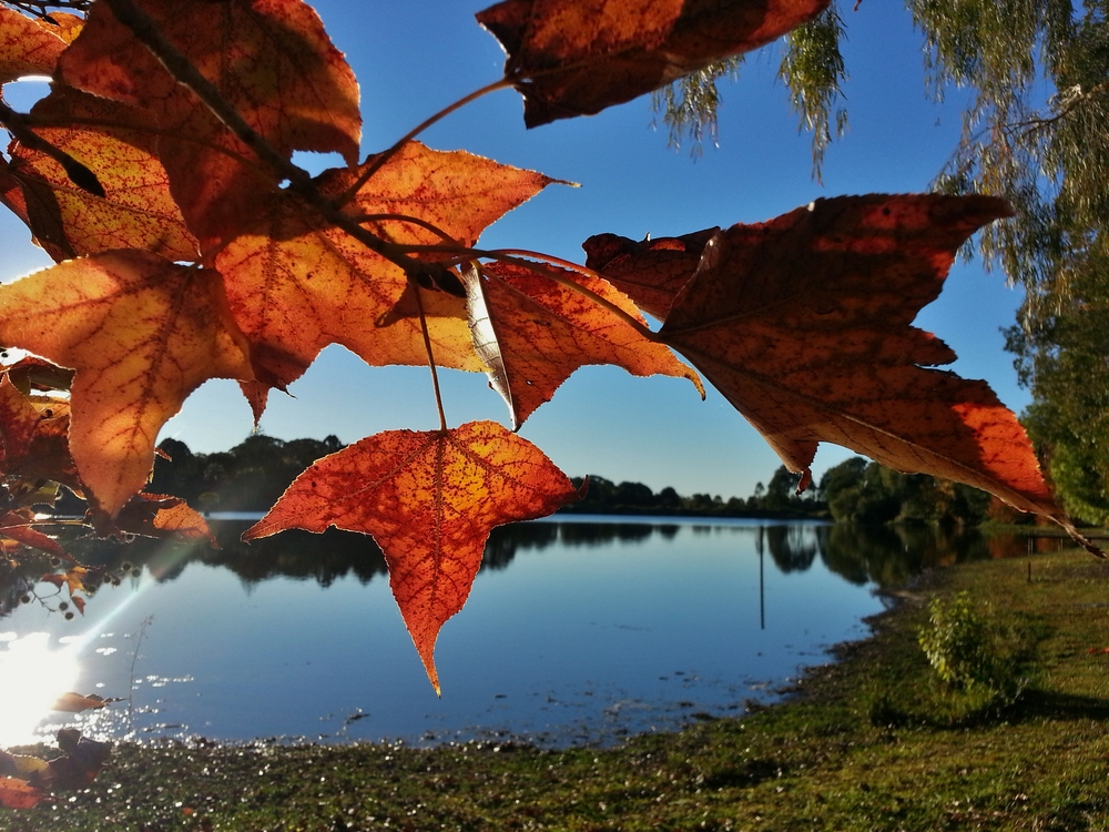 autumn leaves sue moxon