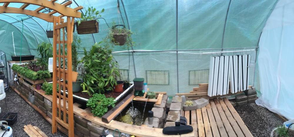 An aquaponics system in Kitsap County designed by Seeds of Grace Volunteer, Jeremy Cook