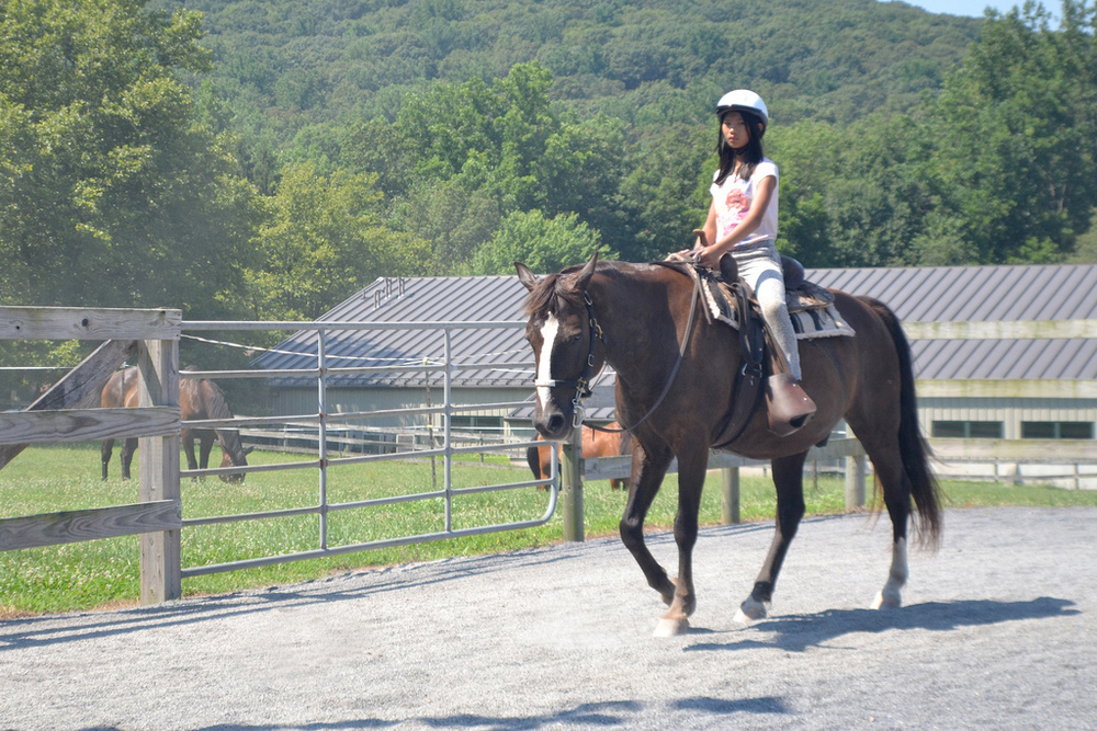 Horses Horsemanship activities at Meadowview Stables
