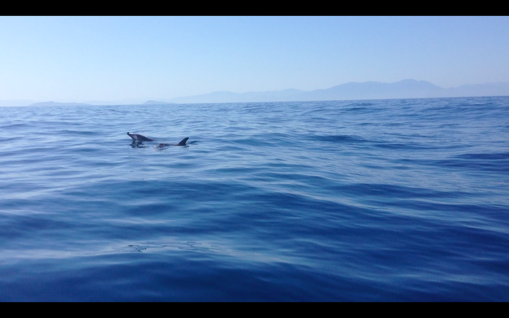 These dolphins came to play with our boat off the coast of Honduras.