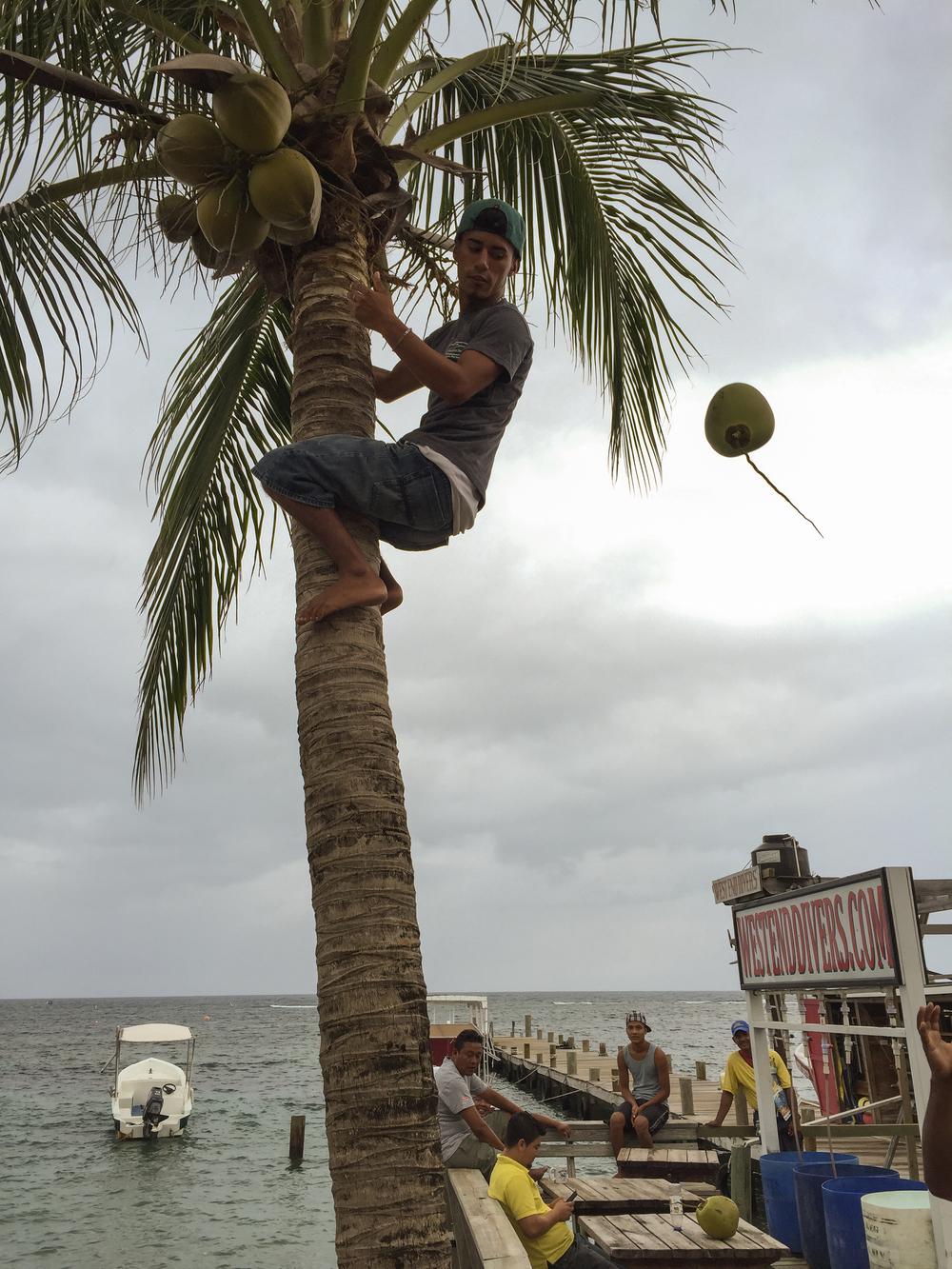 Darwing being Darwing. West End, Roatán, Bay Islands, Honduras.