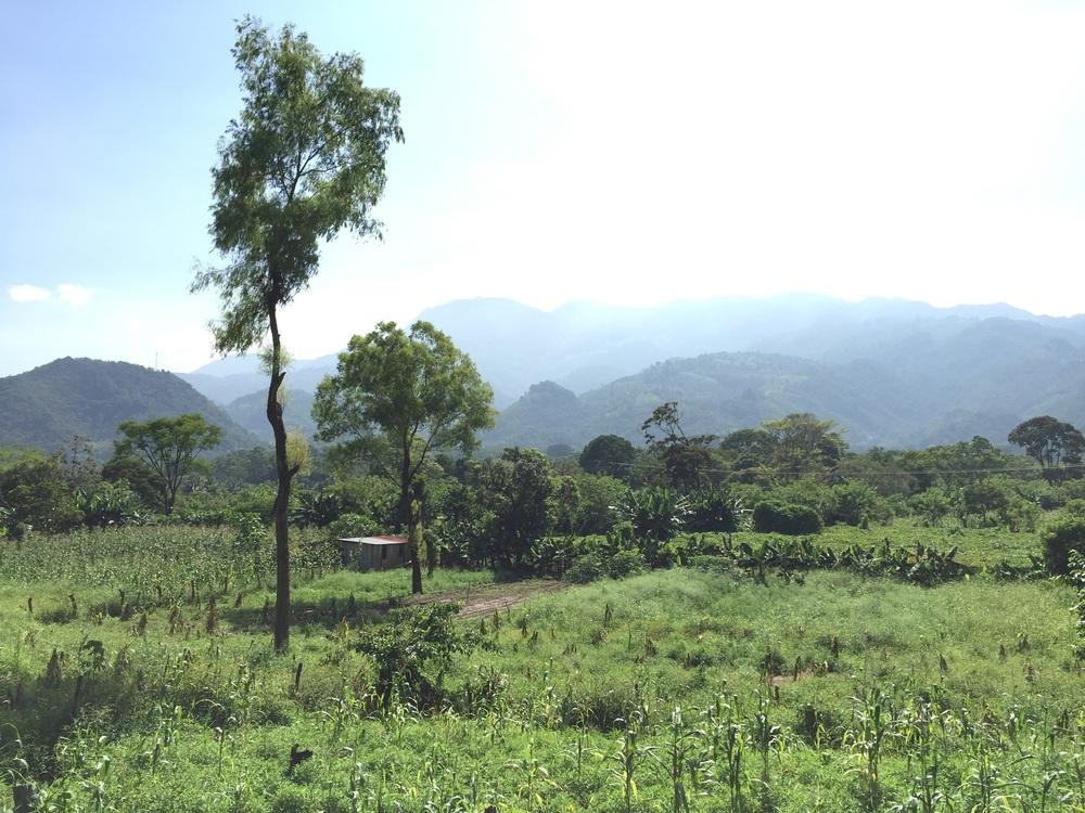 Outside of Los Naranjos, near Lago de Yojoa (Lake Yojoa) in Honduras.