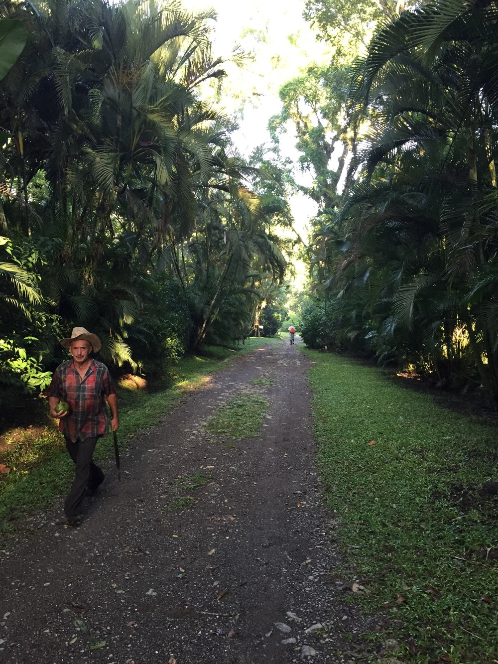 Coffee farmer in Honduras shortly after sunrise. There are no tours or tastings but there are trails to walk.