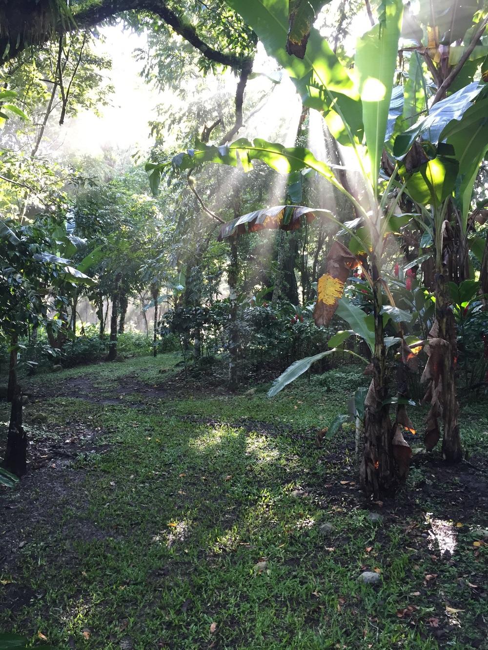 Coffee farm in Honduras.
