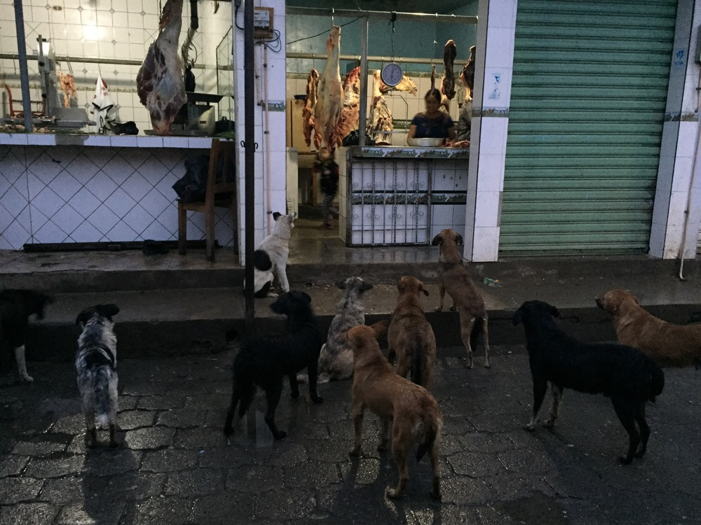 Street dogs at the butcher.