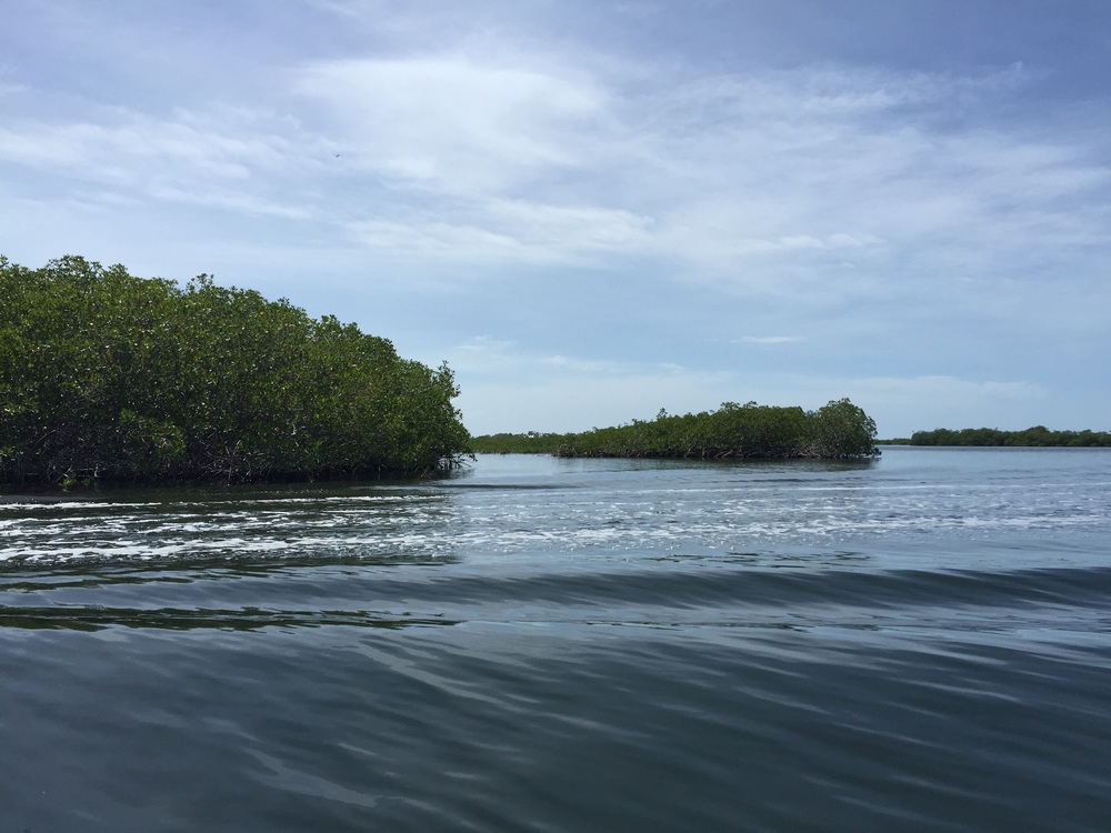 Mangroves from the water taxi in between Independence / Mango Creek and Placencia, Toledo district, southern Belize.
