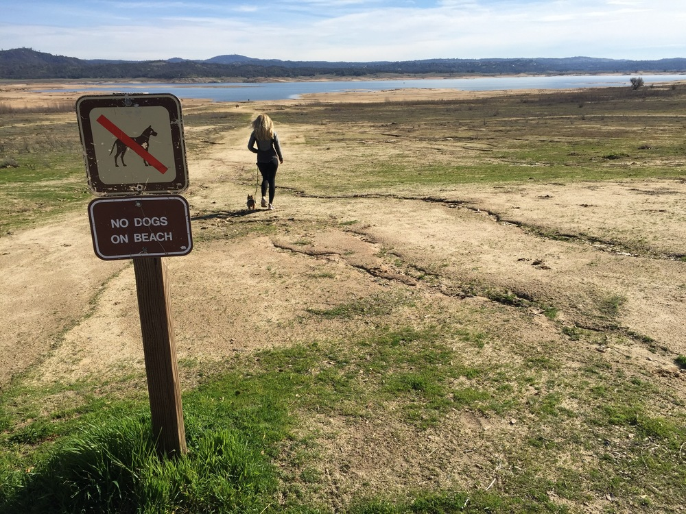 California drought has pretty much dried up the lake. Still a beautiful place. Lots of birds.